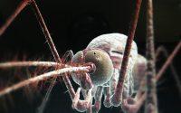 Bagaimana nyamuk memilih mangsa ? ini penjelasannya