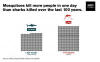 Bahaya nyamuk 50.000 kali lebih mematikan dari pada hiu